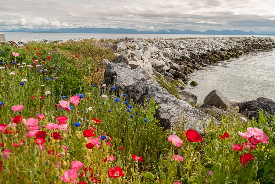 Een 'zee' van bloemen...