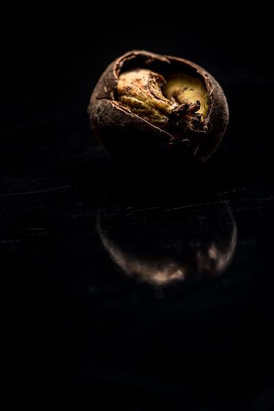 Foto van een rotte eikel