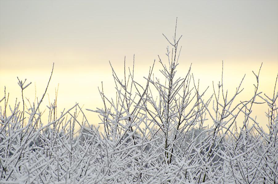 Sneeuwfoto's in Noord-Brabant