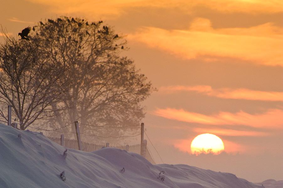 Zonsondergang op een winterse dag met vogels