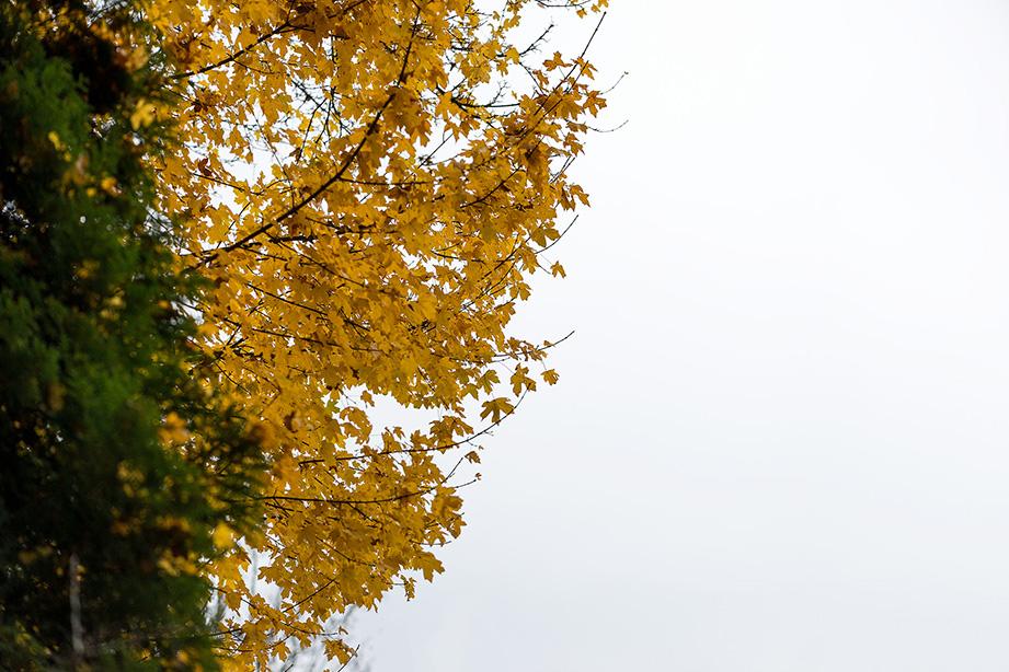 Gele herfstbladeren op een bewolkte dag in Noord-Brabant